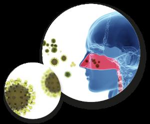adenovirus 4