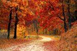 Prožijte Podzim S Dobrou Myslí A Ve Zdraví
